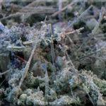 Домашняя пыль. Анализ и состав домашней пыли. Пылевые клещи
