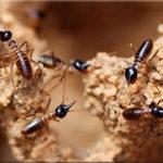 Термиты. Как избавиться от термитов?